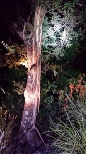 albero colpito dal fulmine