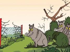 Immagine dalla guida 'Noi e gli animali selvatici'