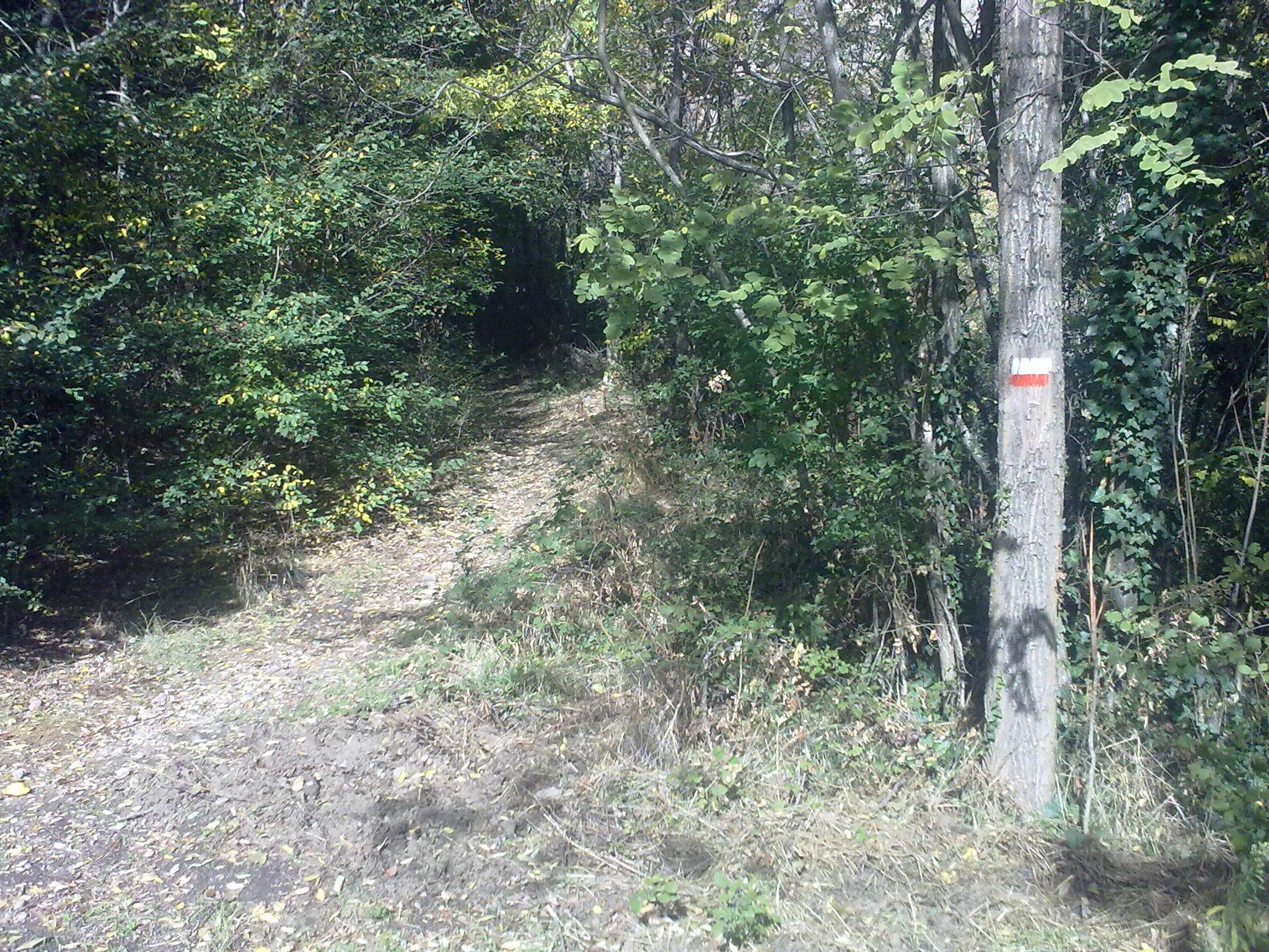 Bivio tra il sentiero CAI n.7 e la strada sterrata che conduce alla proprietà privata della Fattoria di Maiano (di Giuliana Profeti)