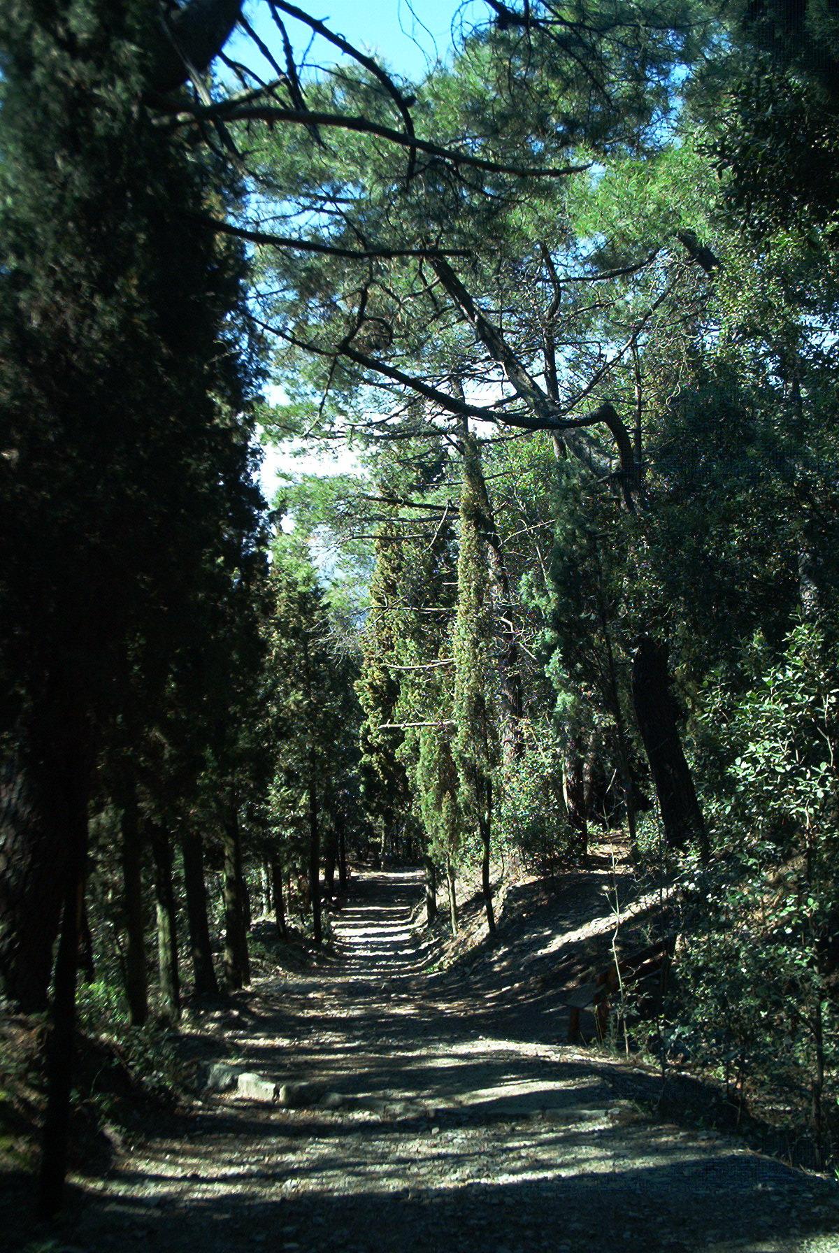 Sentiero degli scalpellini (di Elena Petrini)