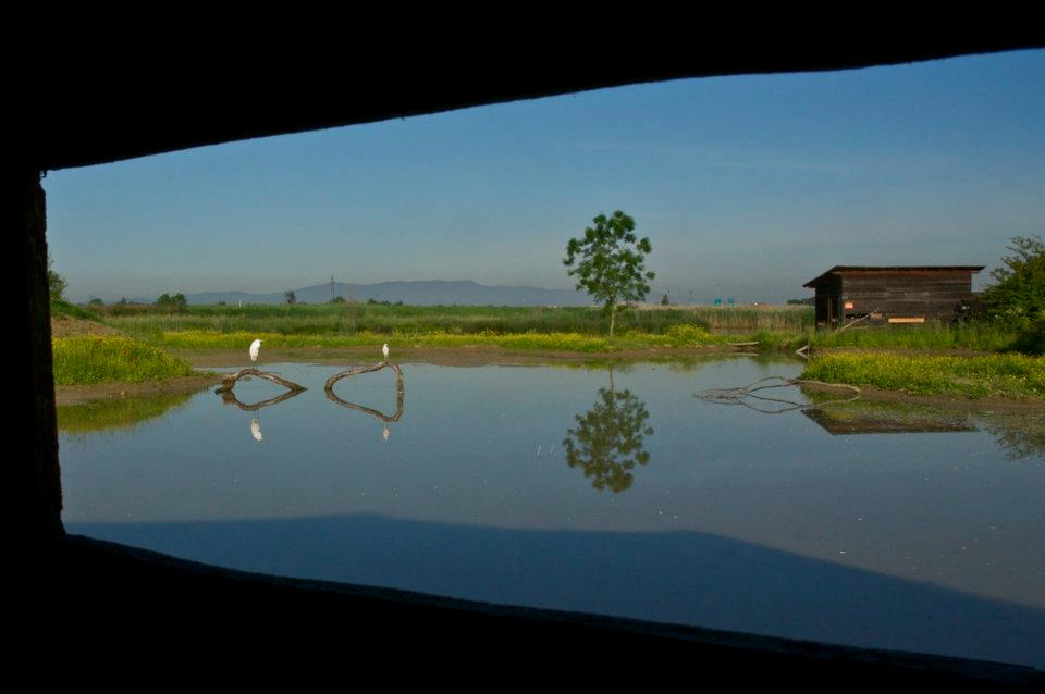 Vista panoramica su chiaro dei lmicoli da uno dei due capanni di osservazione (di Simone Guidotti)