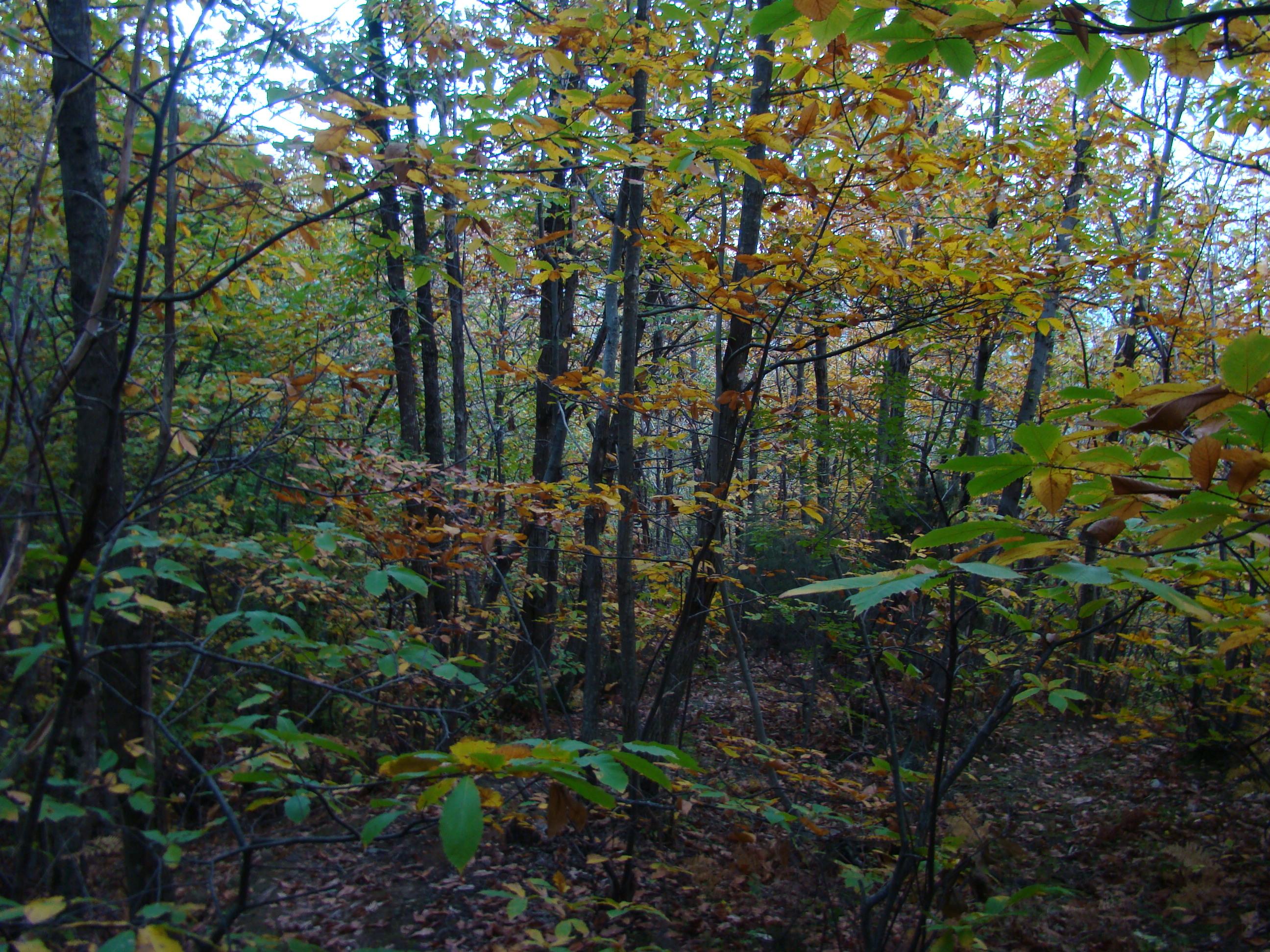 Il bosco lungo la Via del Sasso (di Giuliana Profeti)