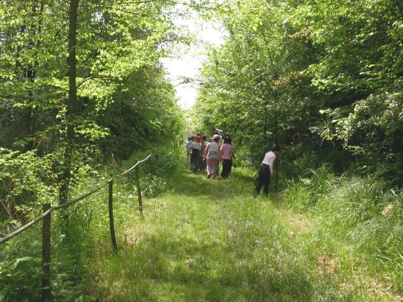 Il sentiero principale è stato realizzato sulla antica Via di Focognano, che faceva originariamente parte della centuriazione romana (di Carlo Scoccianti)