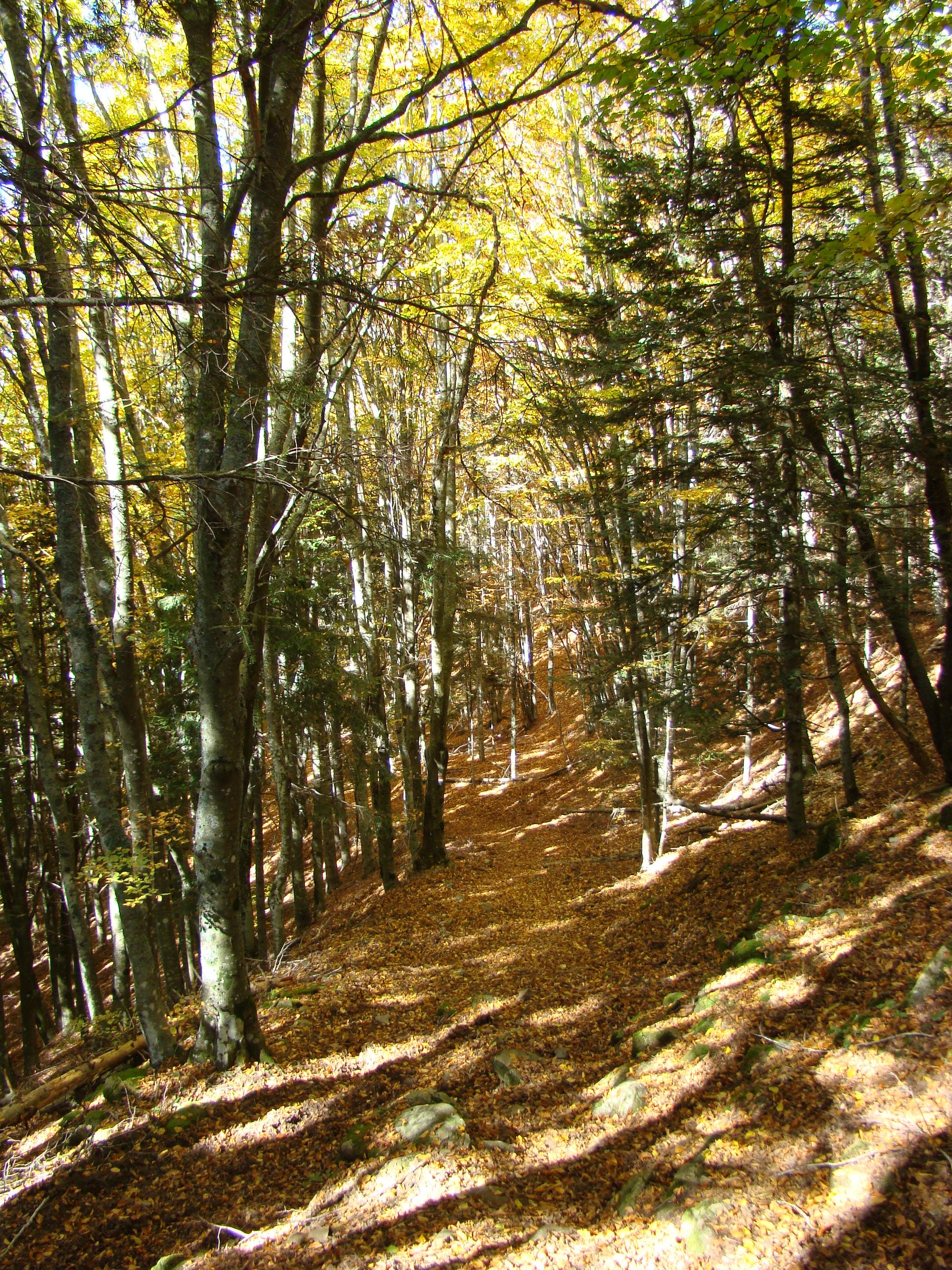 Vista del sentiero che collega la Capanna delle Guardie alla località La Macinaia (di Giuliana Profeti)