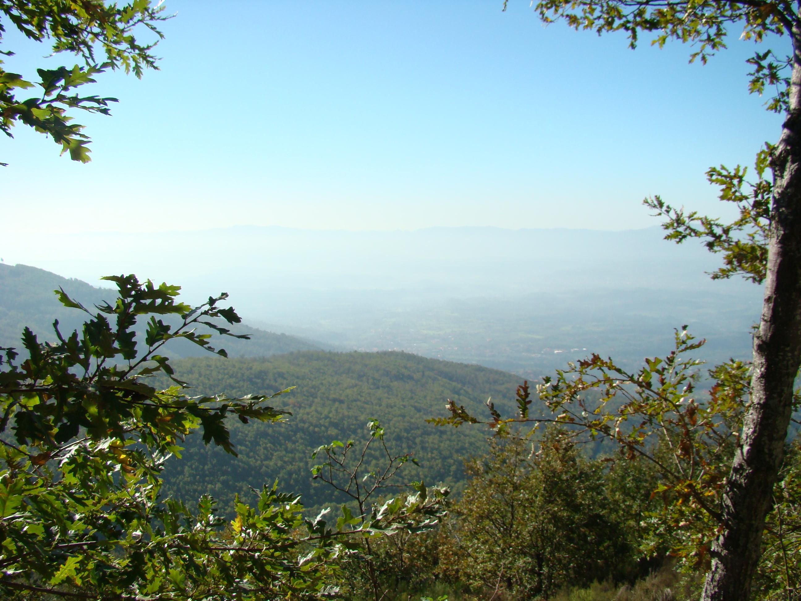 Veduta sulla Foresta di Sant'Antonio (di Giuliana Profeti)