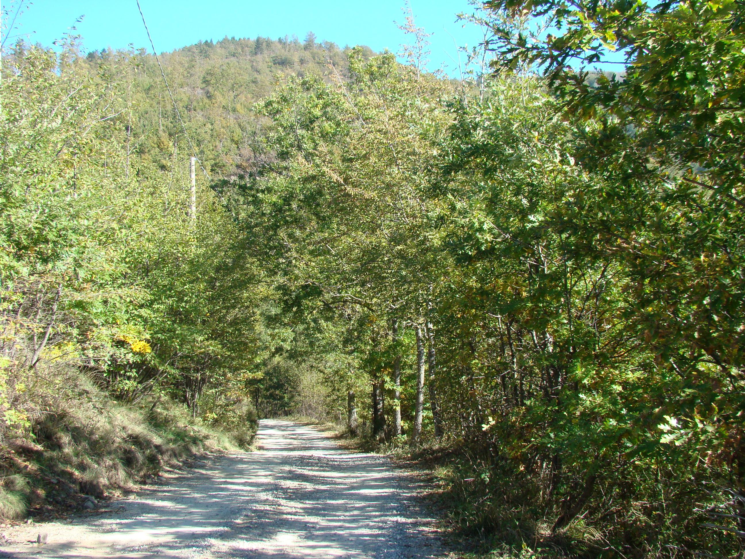 Veduta sul sentiero di accesso alla Foresta di Sant'Antonio da Cascina Nuova (di Giuliana Profeti)