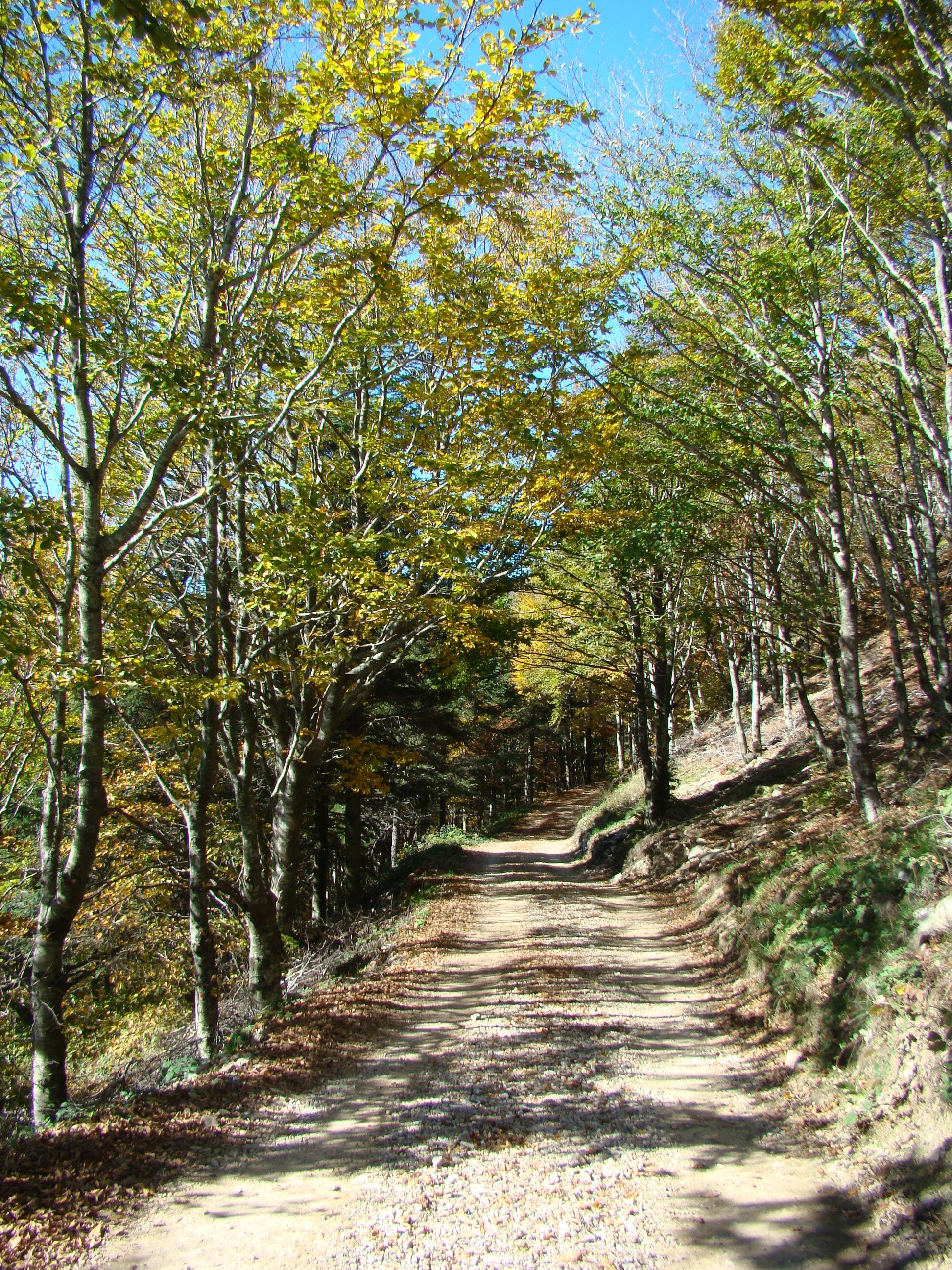 Sentiero didattico (di Giuliana Profeti)