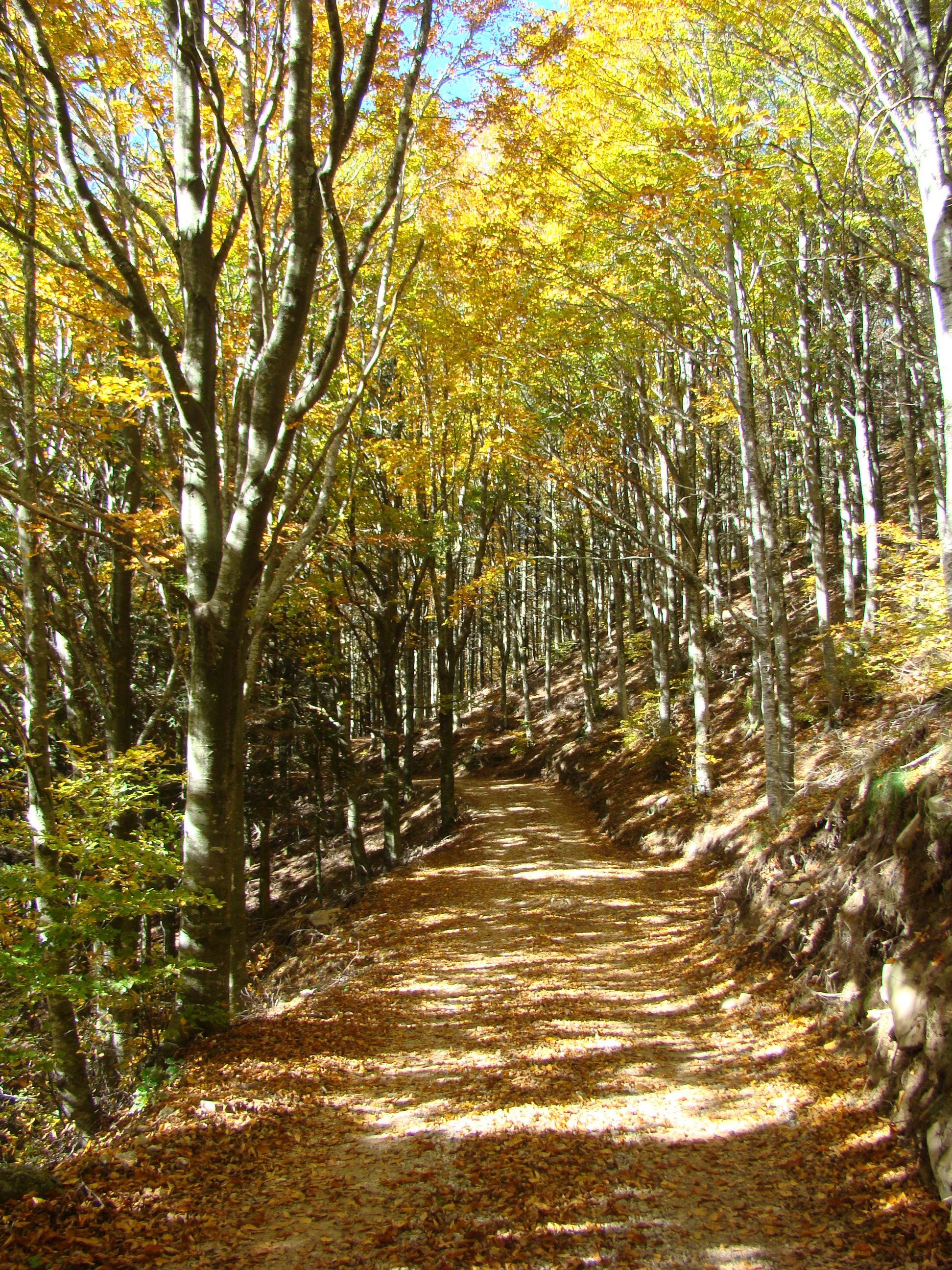 Vista del sentiero didattico (di Giuliana Profeti)