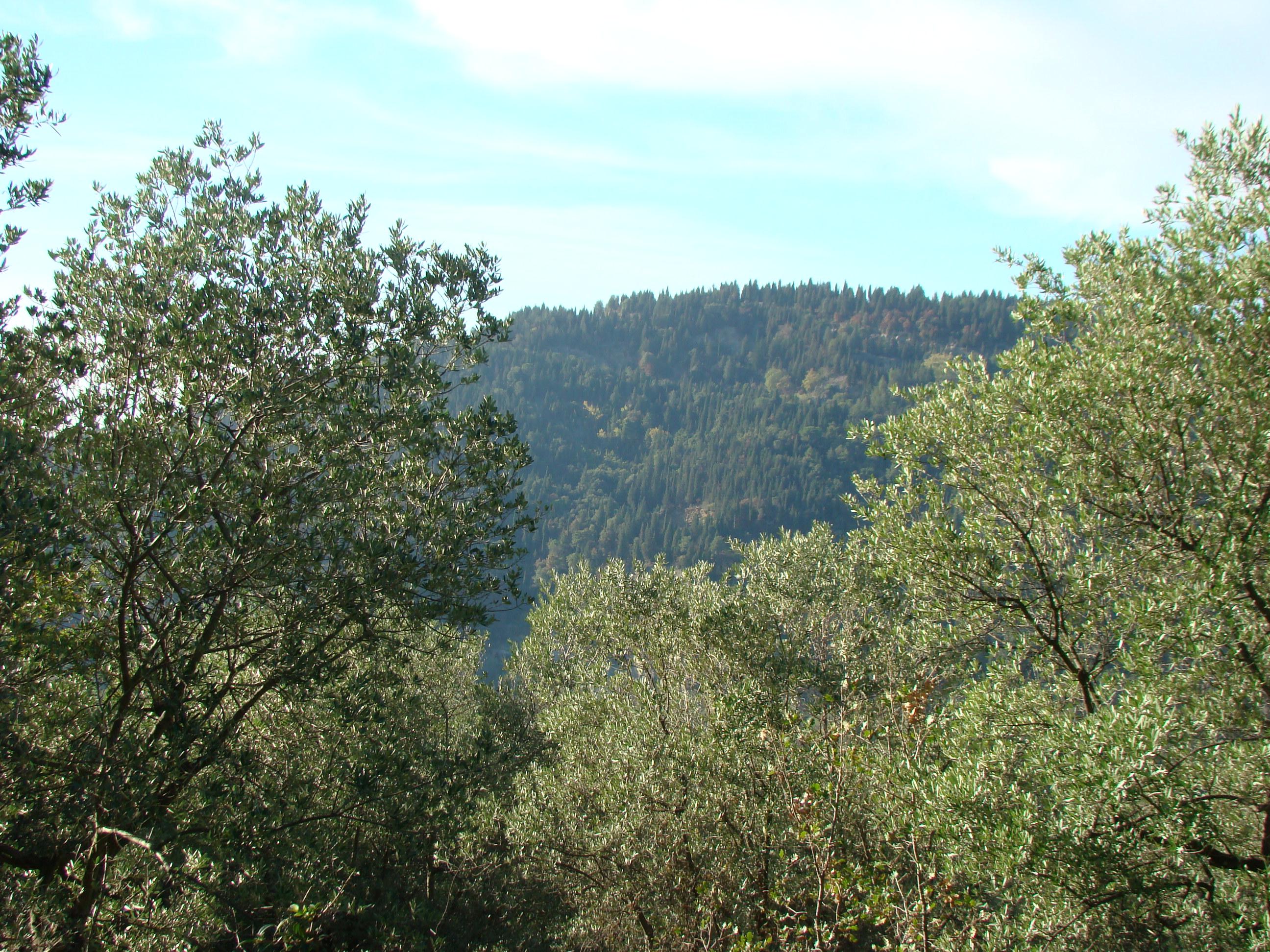 Il Monte Ceceri visto dalla Strada Provinciale per Vincigliata (di Giuliana Profeti)
