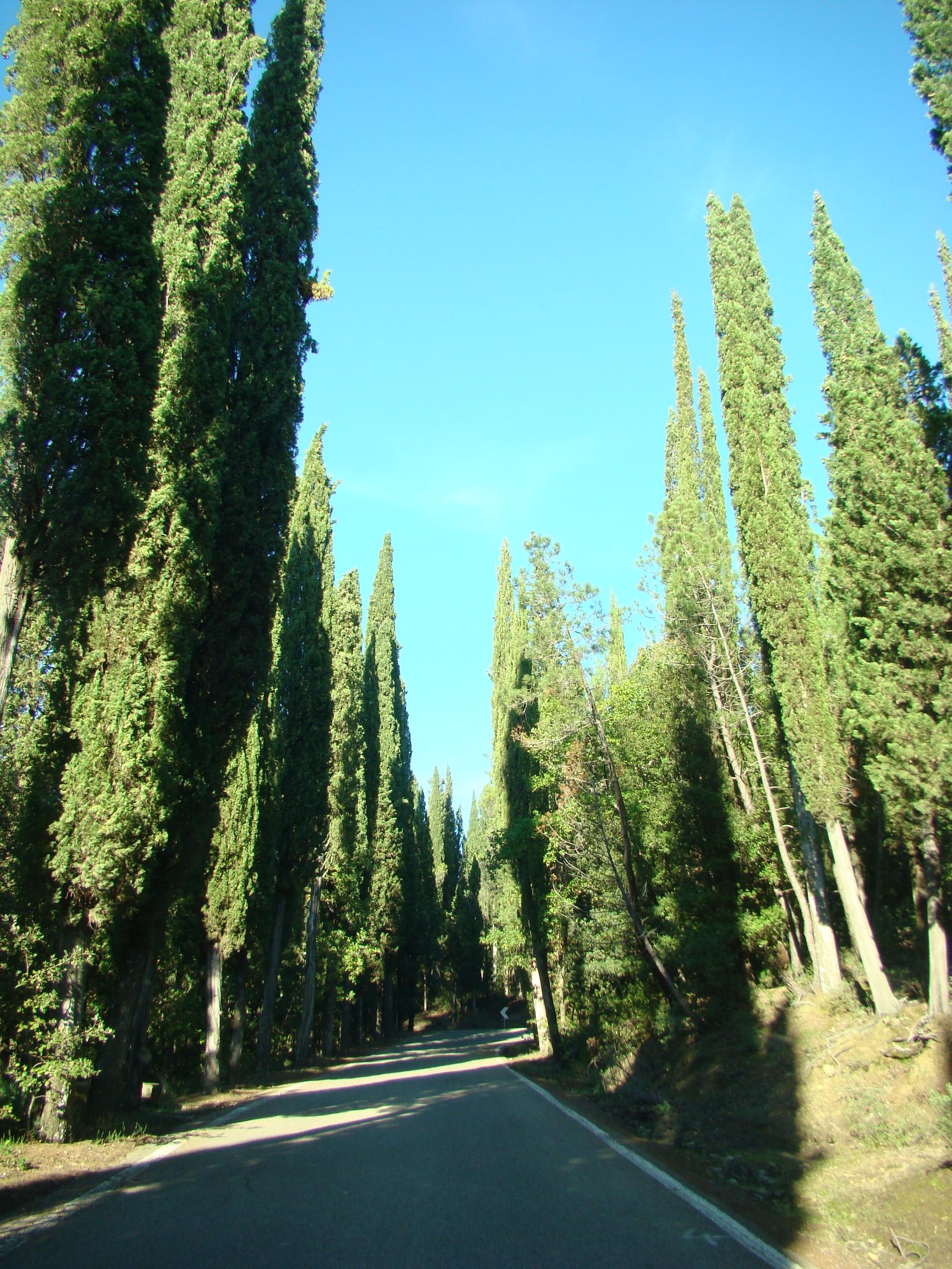 Il bosco attraversato dalla Strada provinciale di Vincigliata (di Giuliana Profeti)