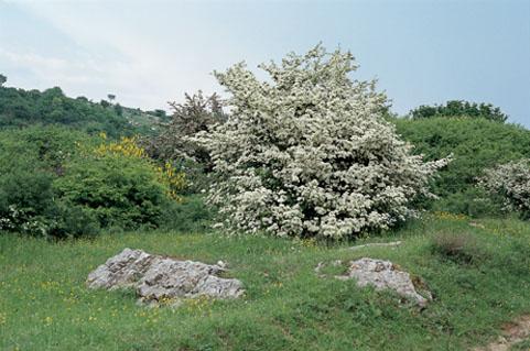Panorama sul Monte Cantagrilli (di Comune di Calenzano)
