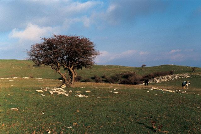 Panorama sul Monte Catagrilli (di Comune di Calenzano)