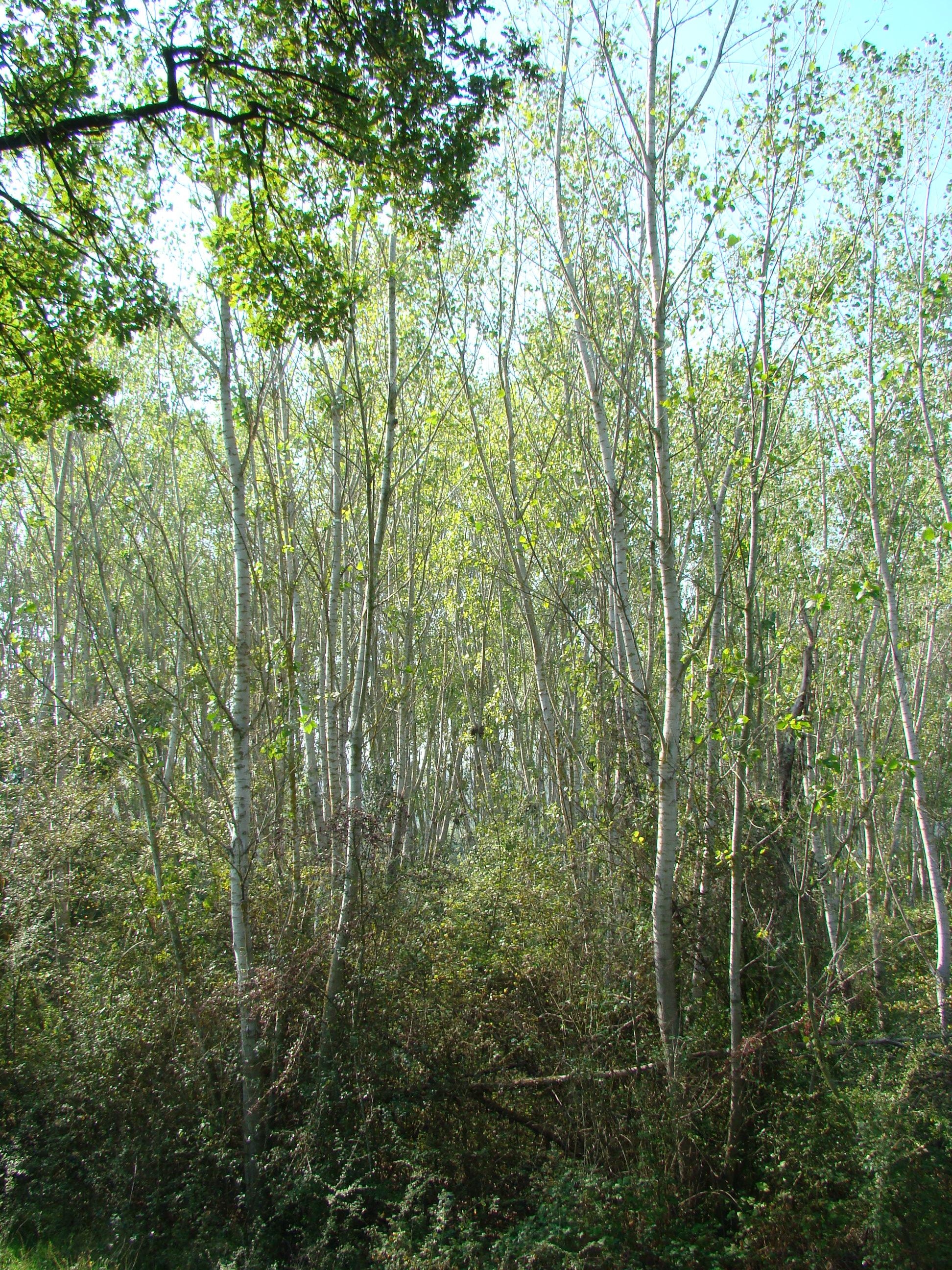 Nidi tra gli alberi della Garzaia (di Giuliana Profeti)