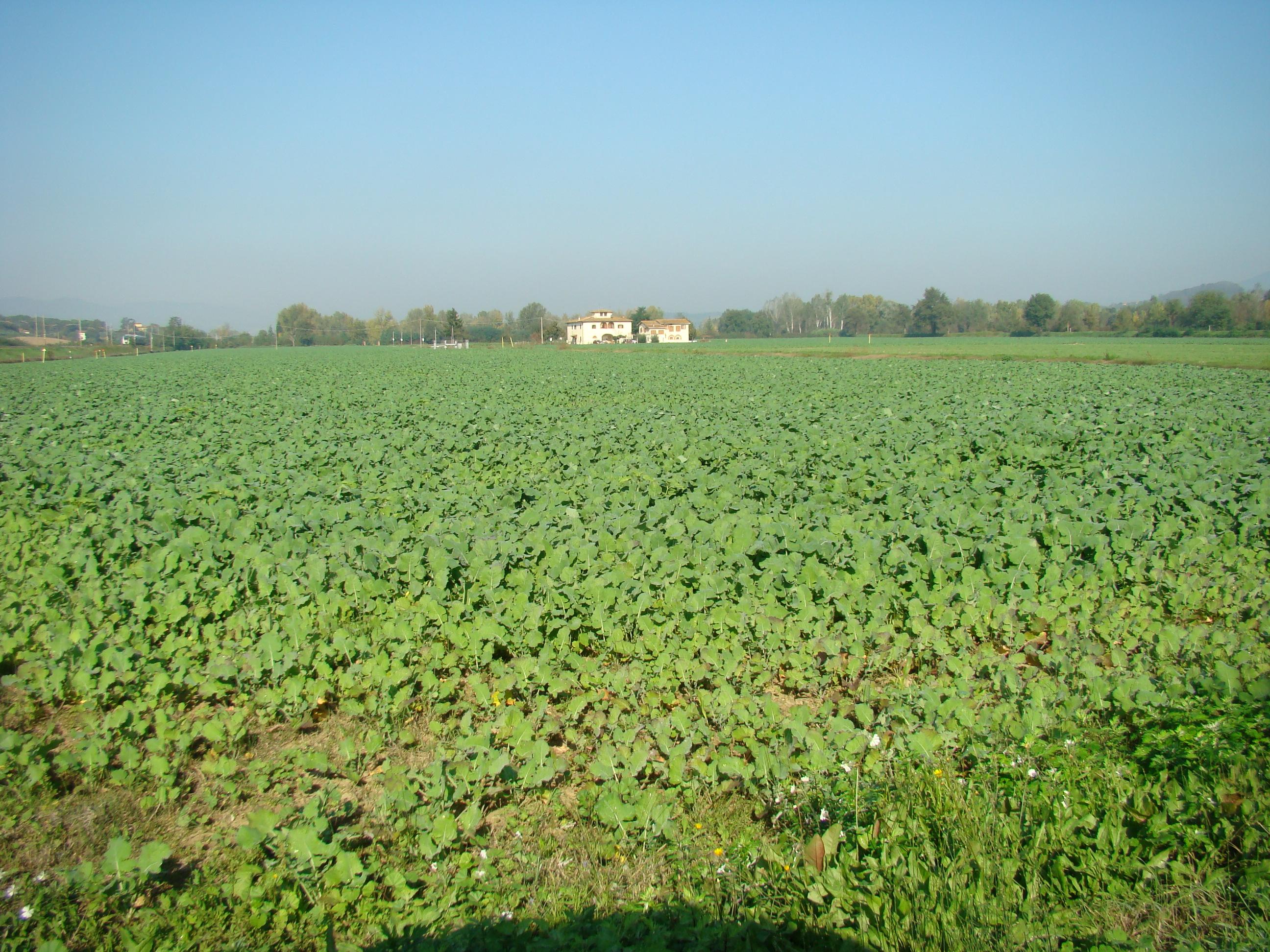Panorama dalla strada di accesso alla Garzaia (di Giuliana Profeti)