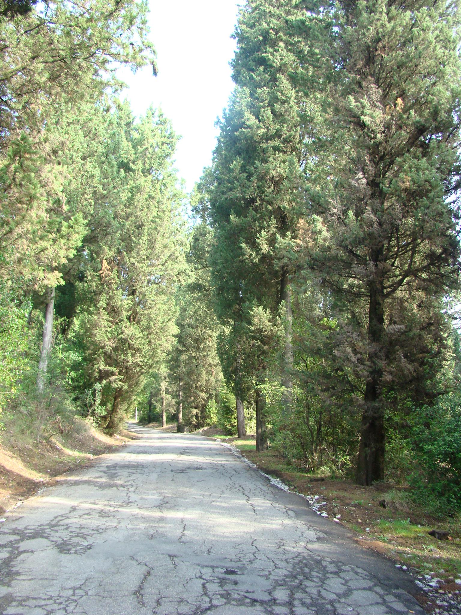 Panorama lungo la Via di Serpiolle (di Giuliana Profeti)