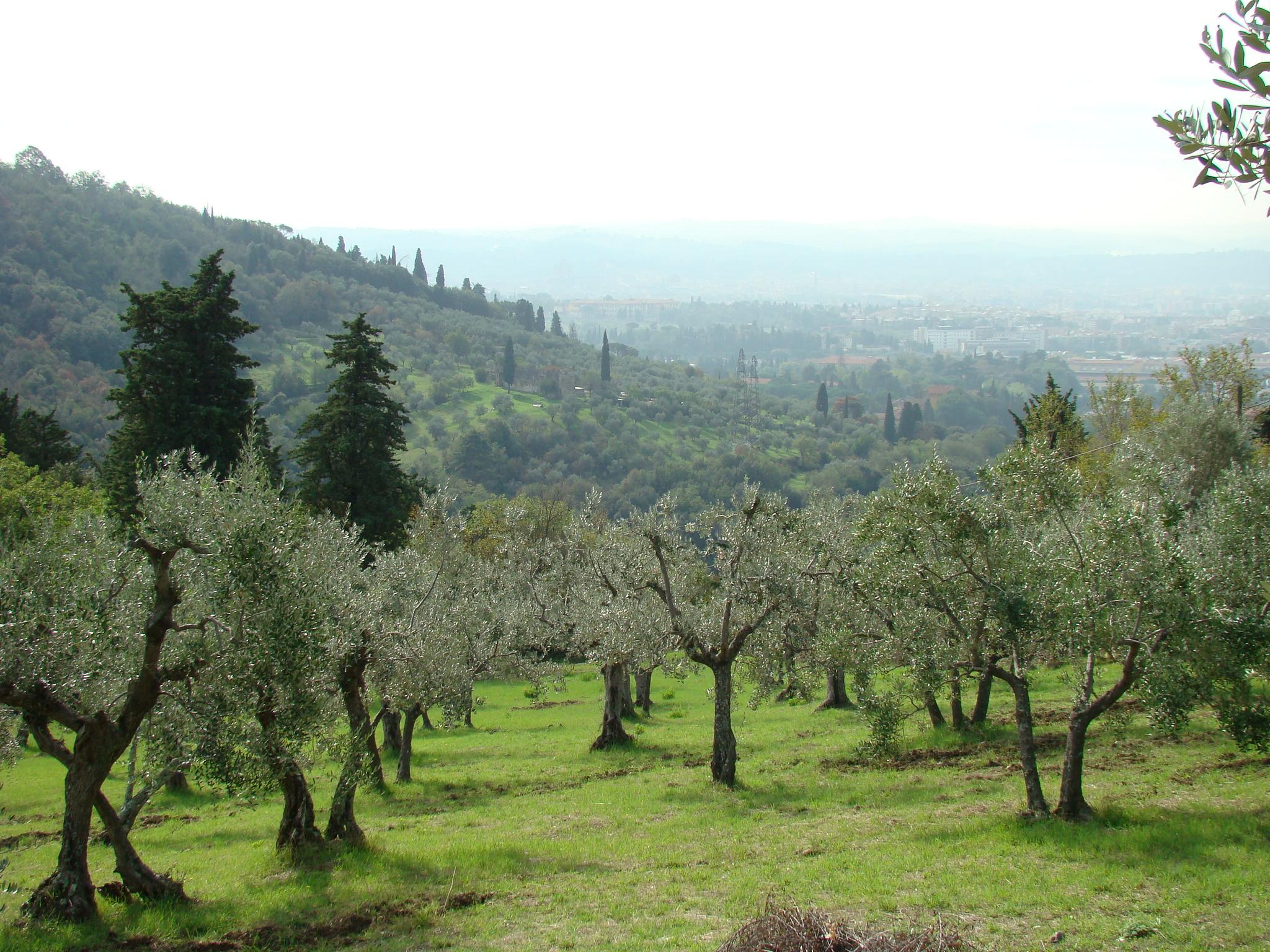 Panorama dalla Via di Serpiolle (di Giuliana Profeti)