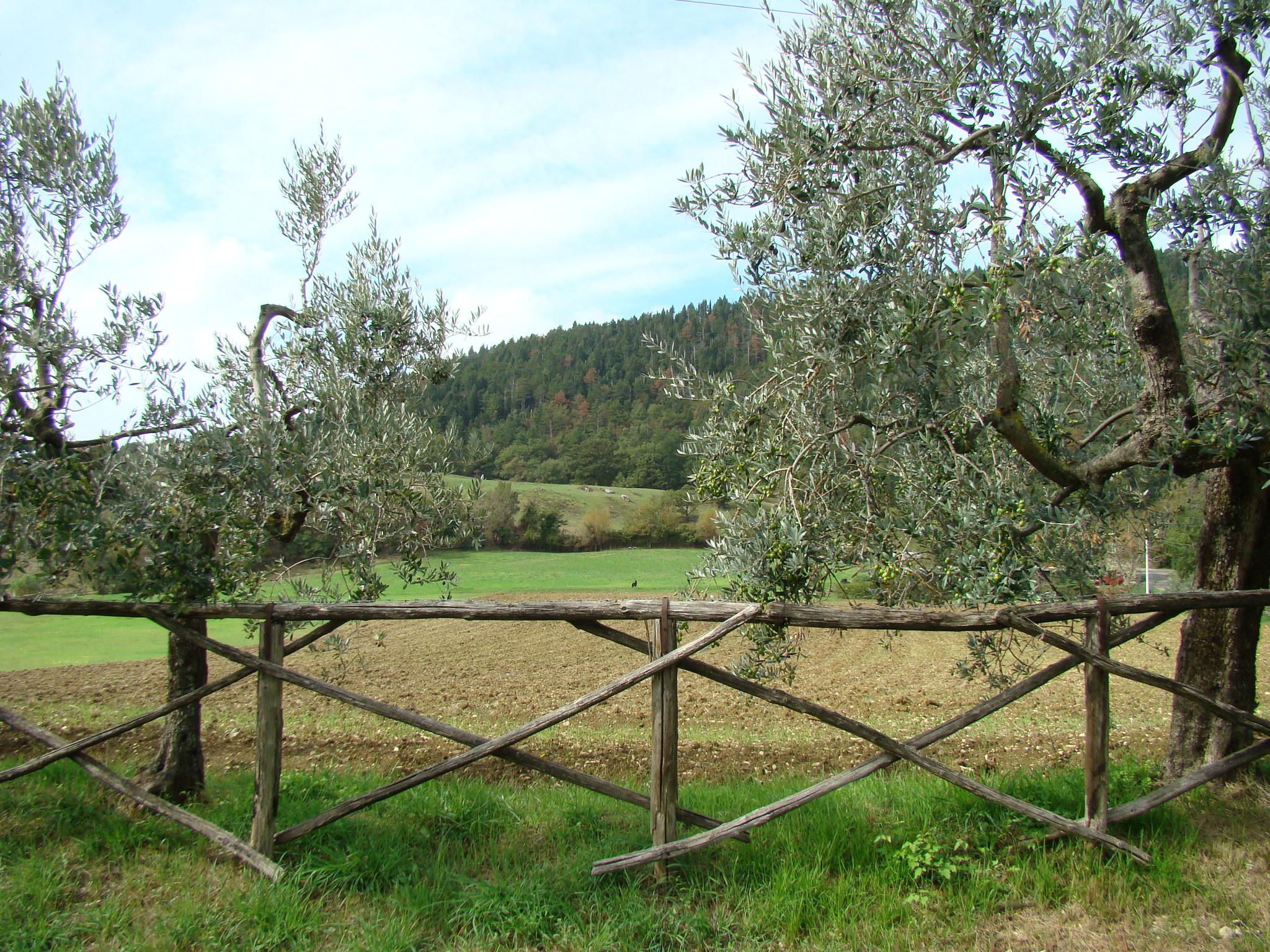 Panorama dalla Pieve di Cercina (di Giuliana Profeti)