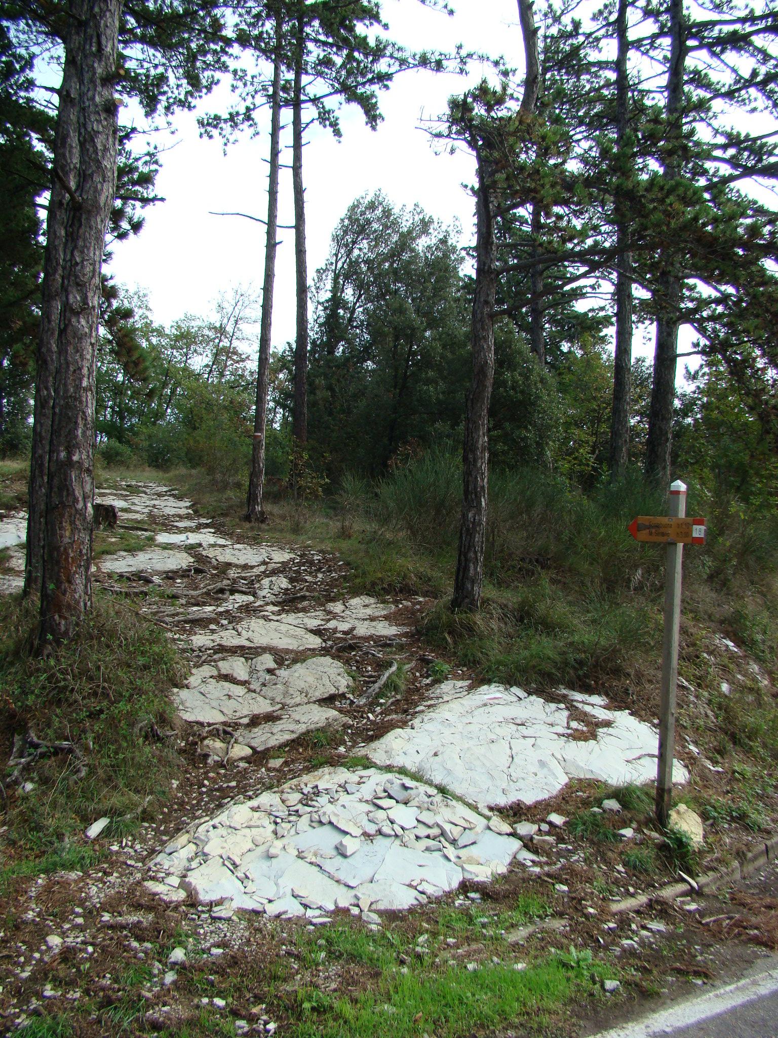 Sentiero CAI (di Giuliana Profeti)