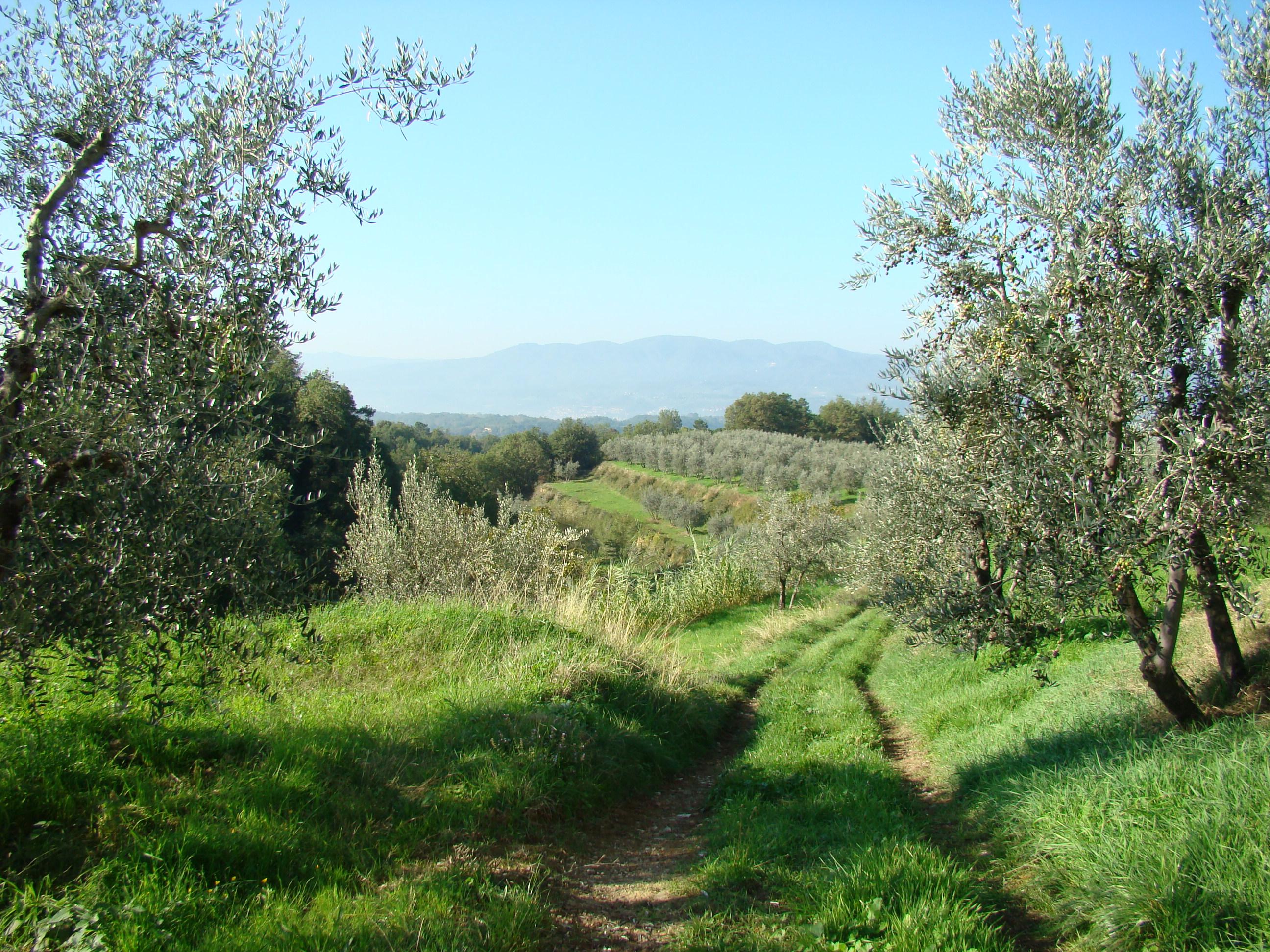 Panorama sulla valle da Cancelli (di Giuliana Profeti)