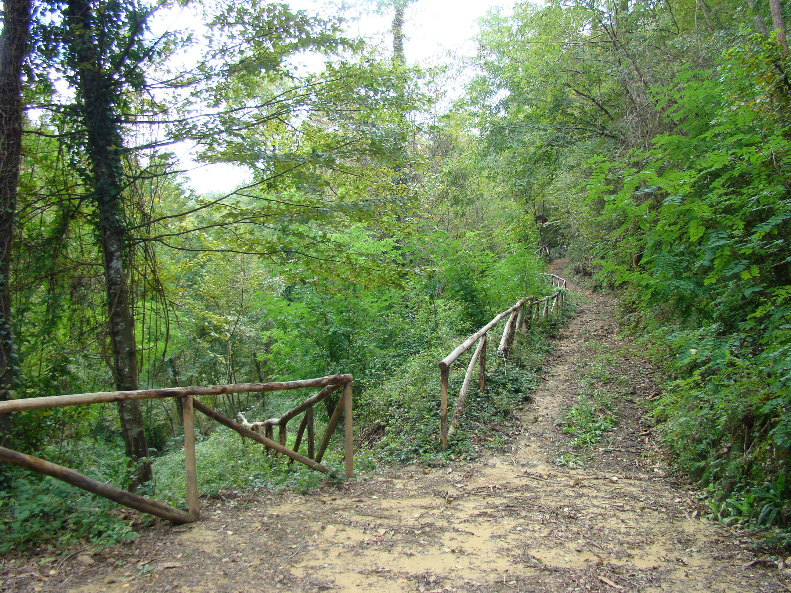 Corrimano lungo il sentiero che scende fino al Carfalo (di Giuliana Profeti)