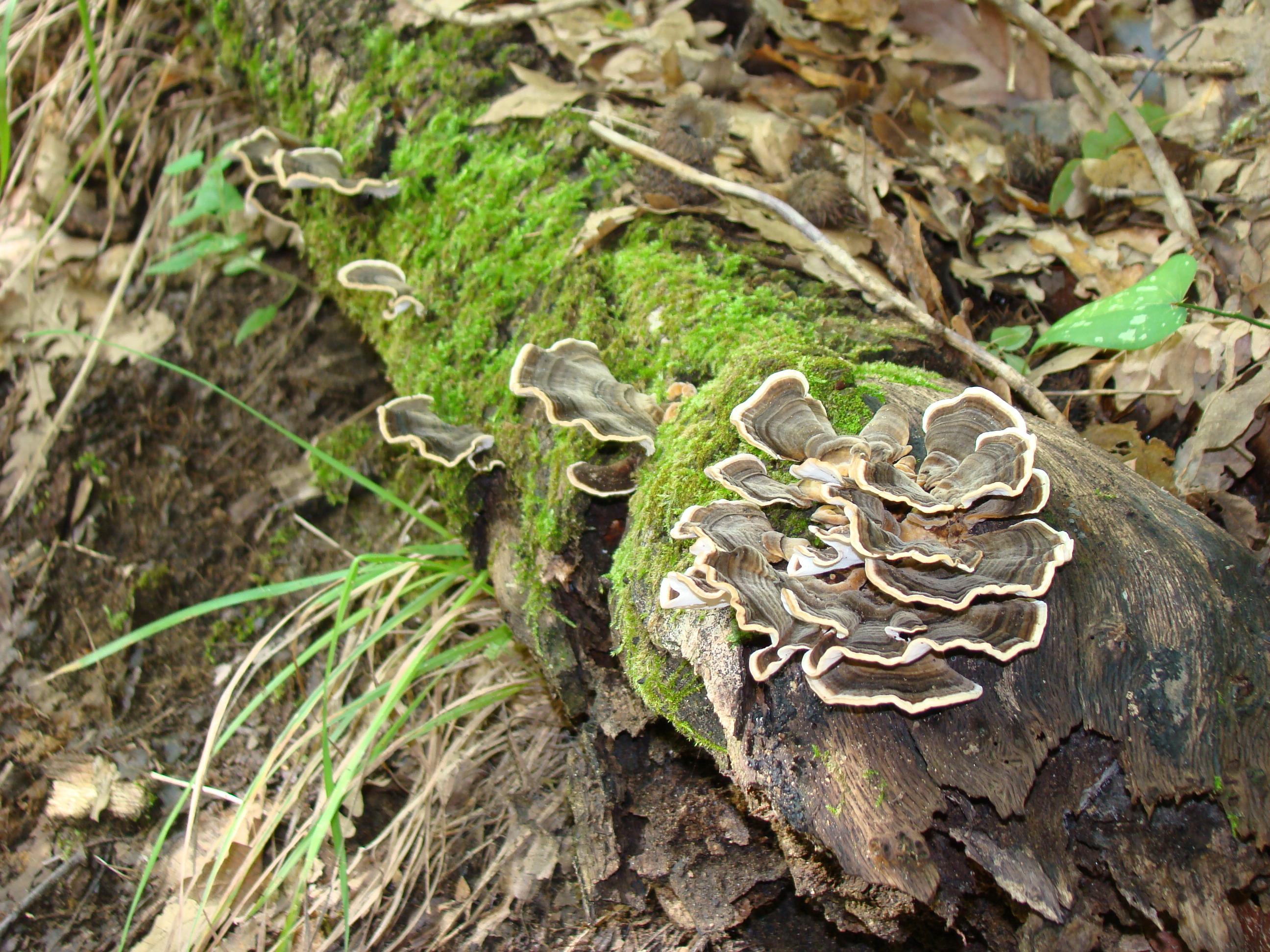 Funghi (di Giuliana Profeti)