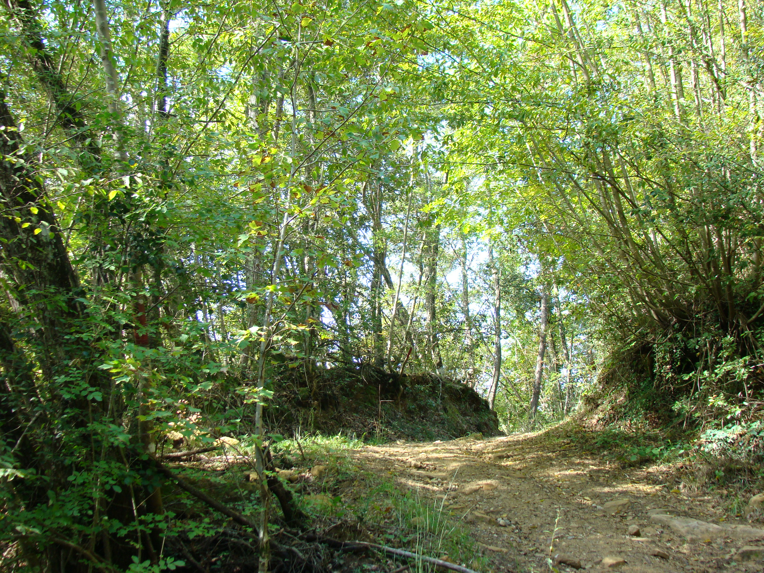 Panorama lungo il versante sud-ovest della valle del Torrente Carfalo (di Giuliana Profeti)