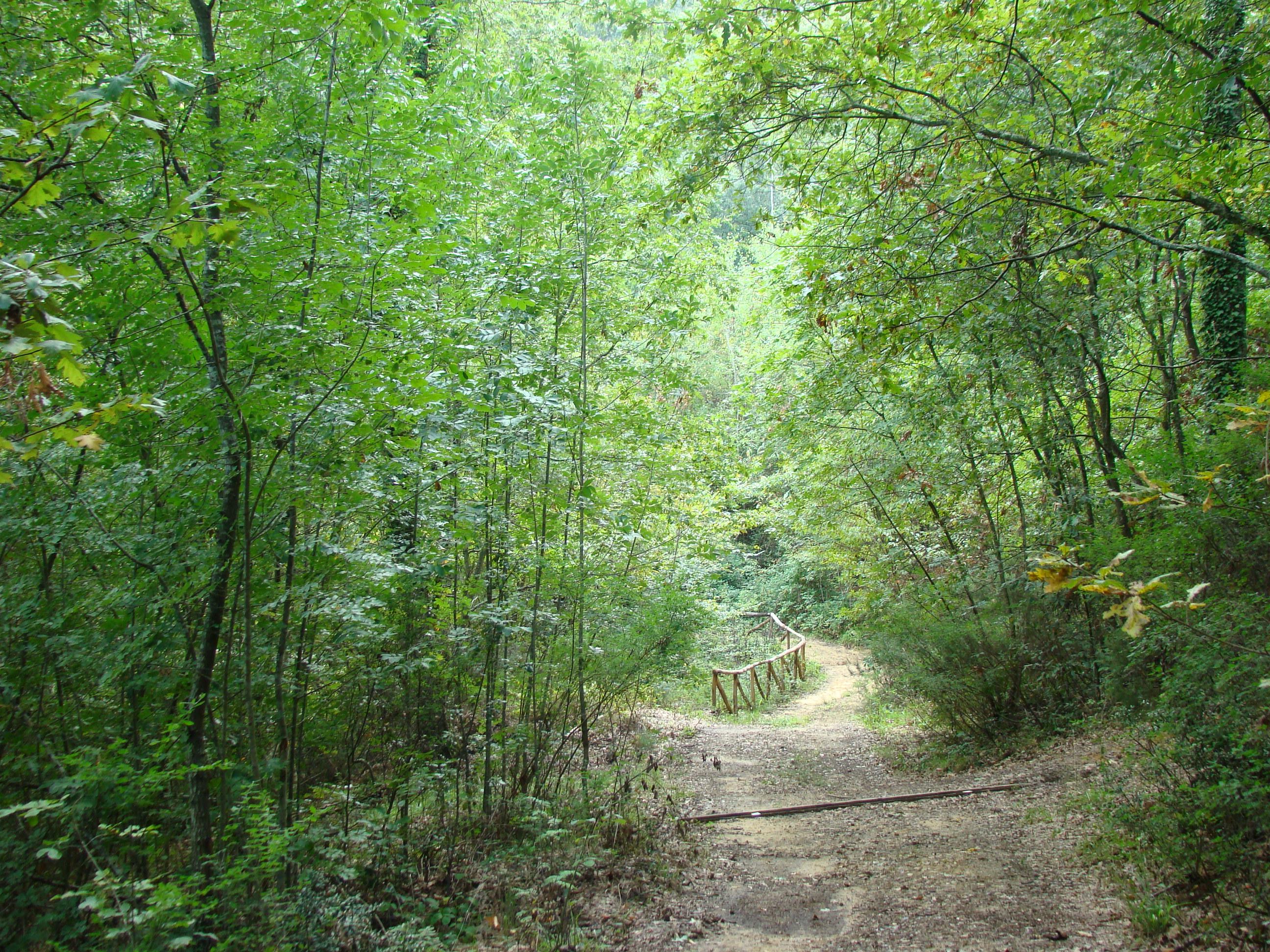 Panorama lungo il sentiero del Tasso Monumentale (di Giuliana Profeti)