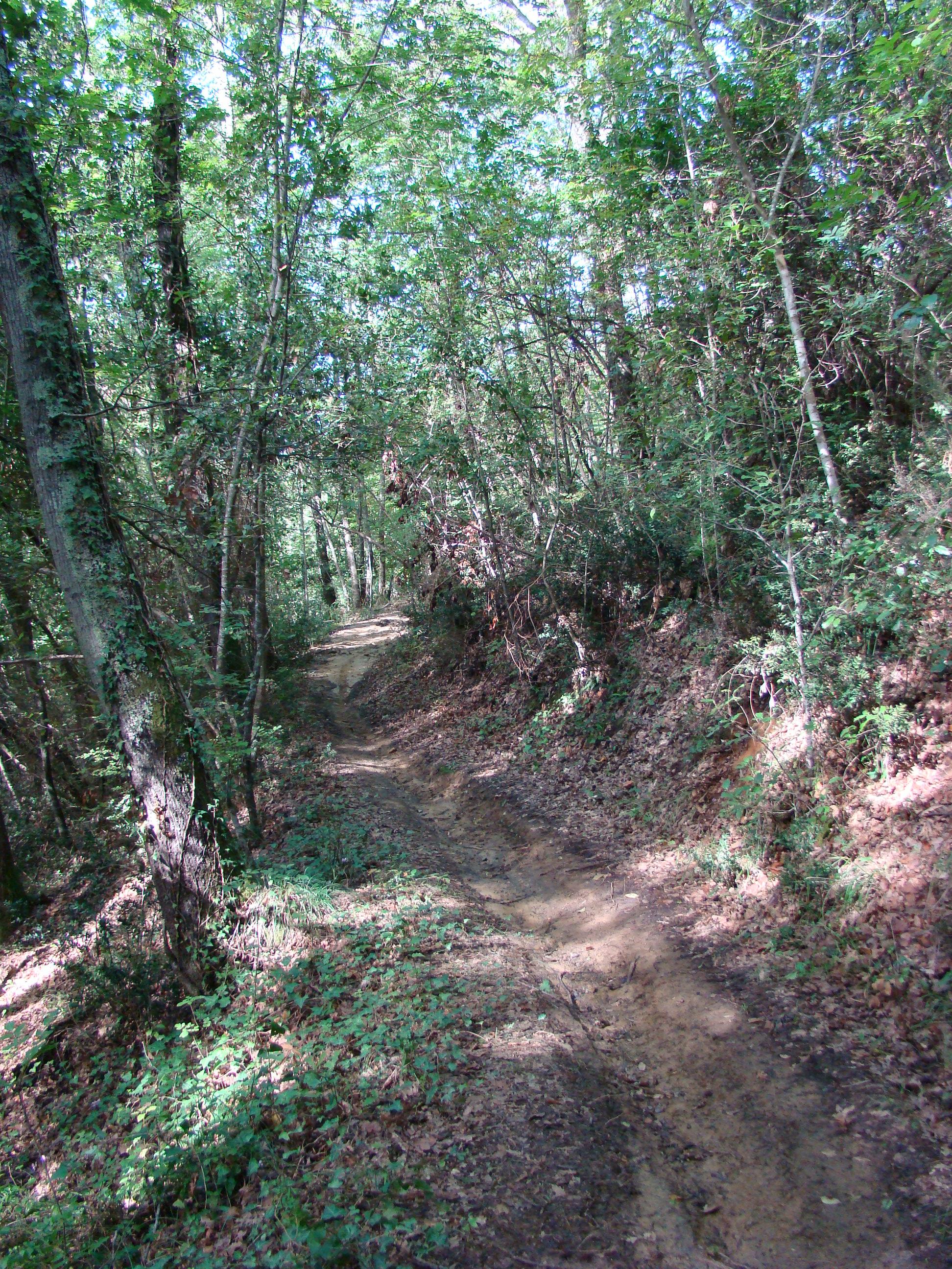 Panorama lungo il Sentiero dell'Isoipsa (di Giuliana Profeti)