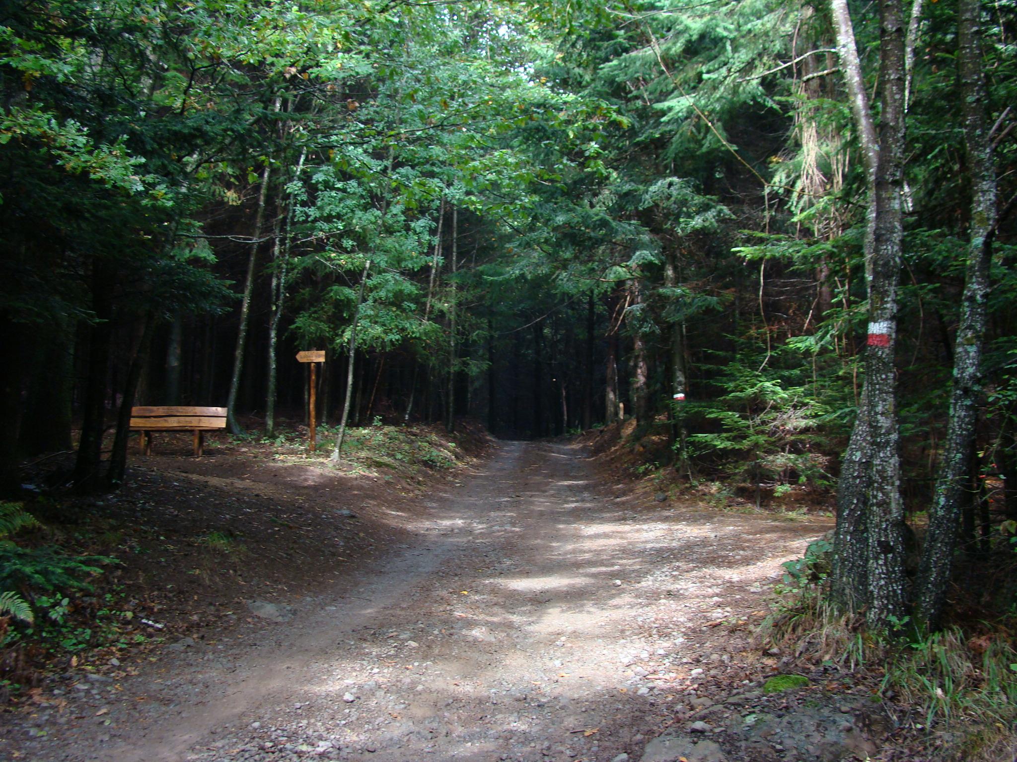 Panchina lungo il sentiero n. 1 (di Giuliana Profeti)