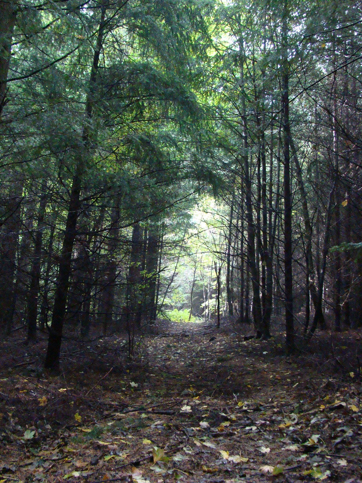Sentiero n. 1 (di Giuliana Profeti)