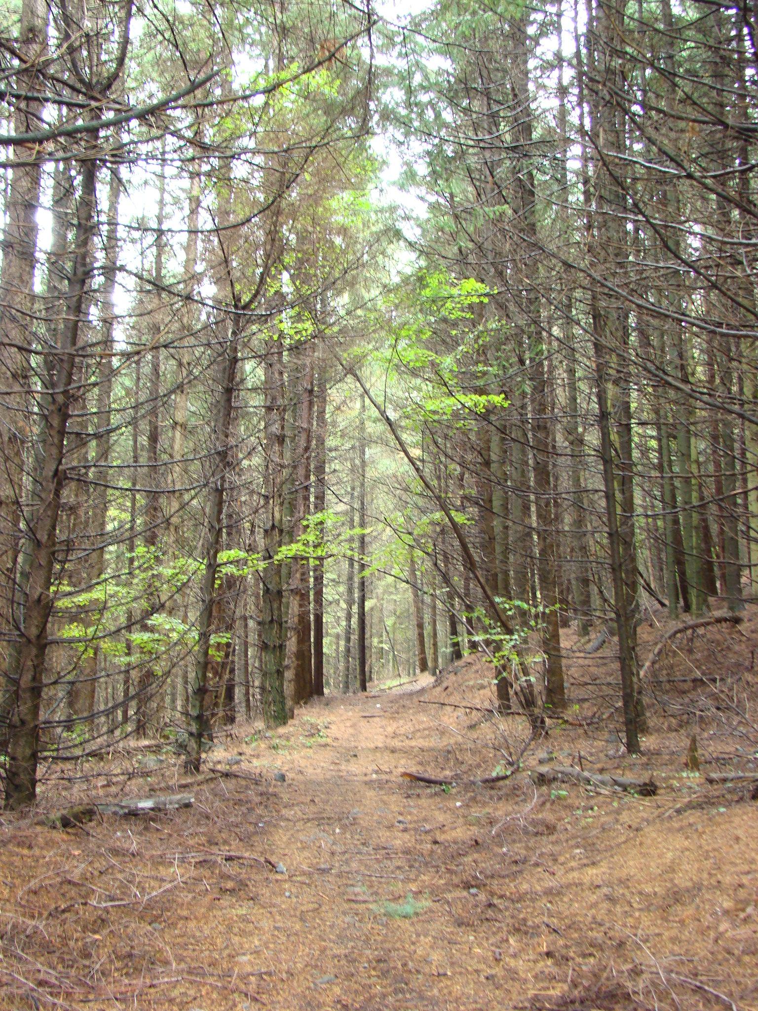 Sentiero n. 3