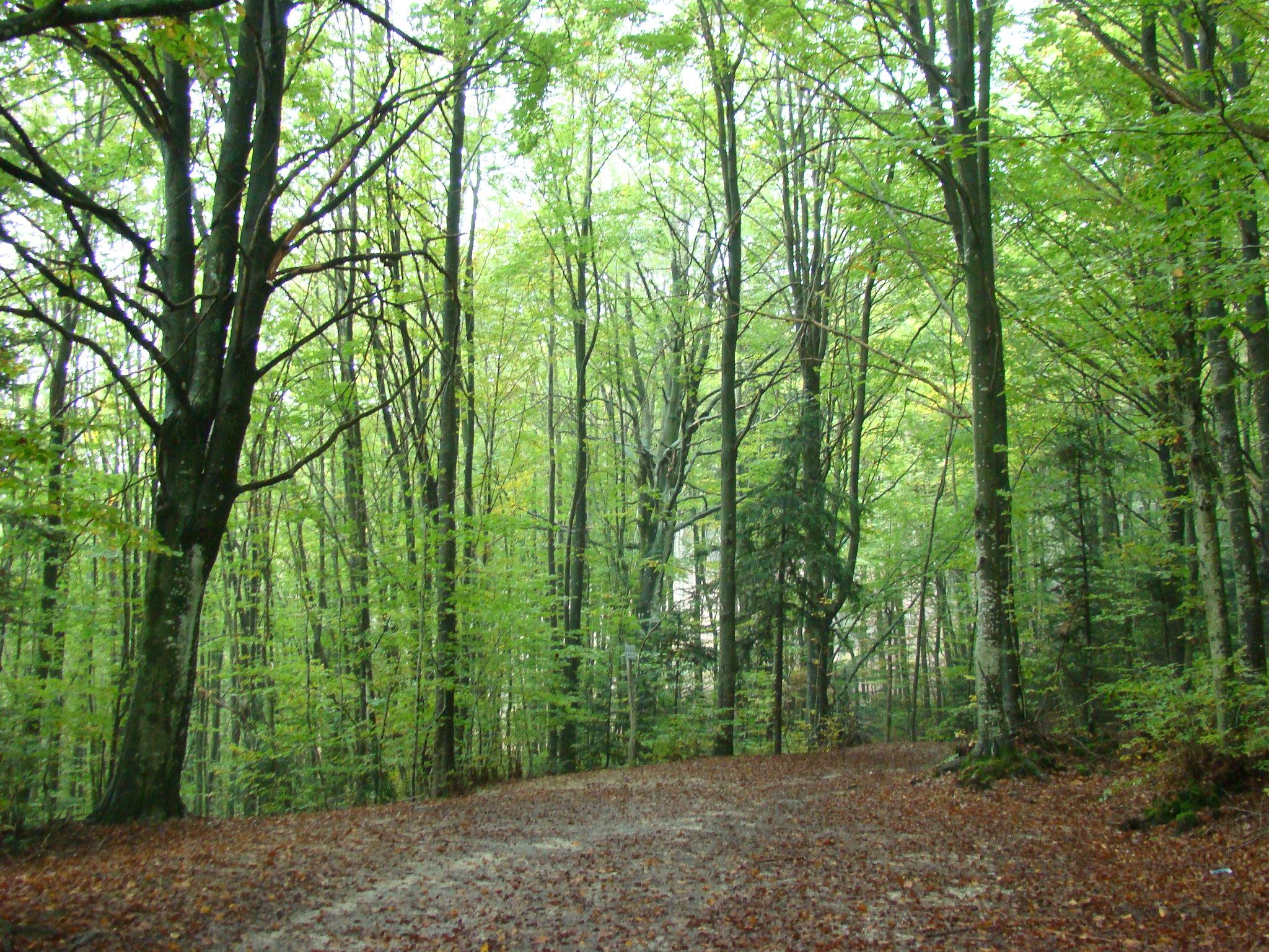 Panorama lungo il sentiero (di Giuliana Profeti)