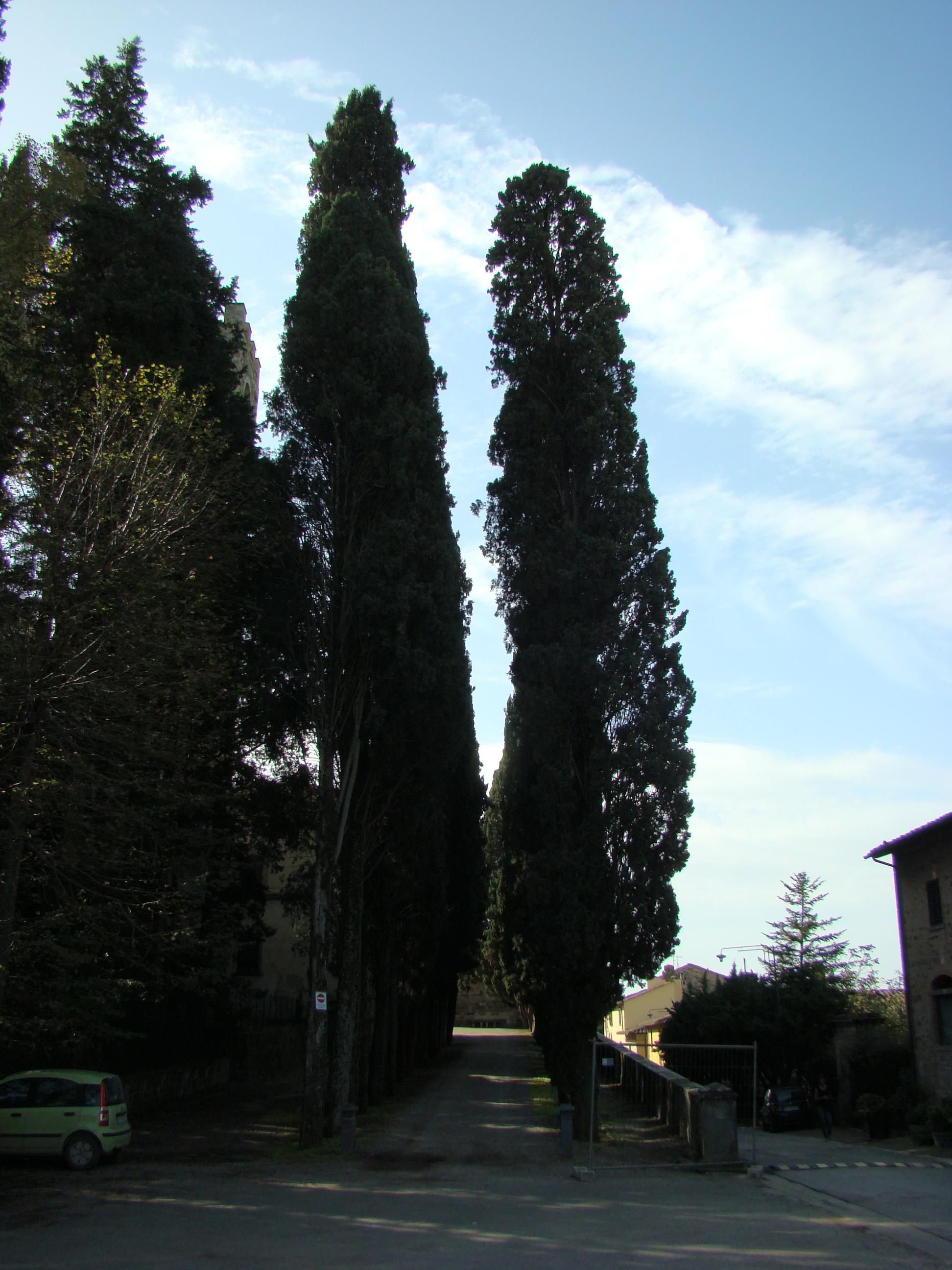 Viale di accesso alla Badia a Passignano (di Giuliana Profeti)