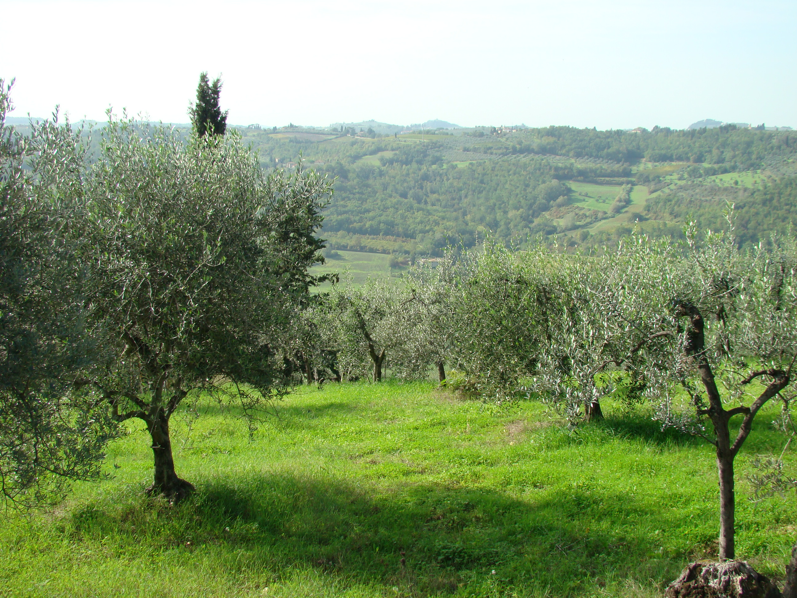 Panorama in località Sant'Angelo (di Giuliana Profeti)