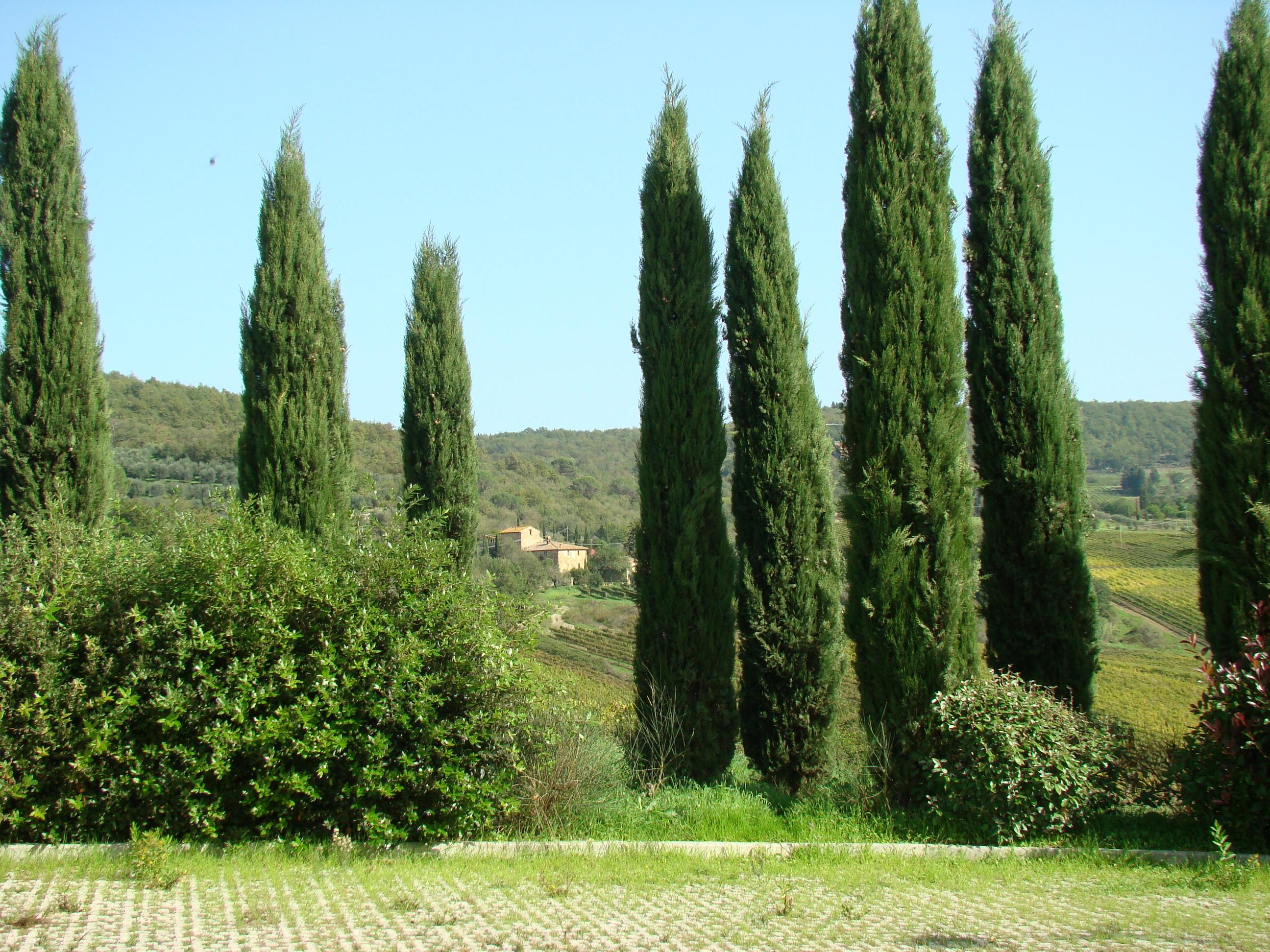 Panorama dal parcheggio della Badia a Passignano (di Giuliana Profeti)