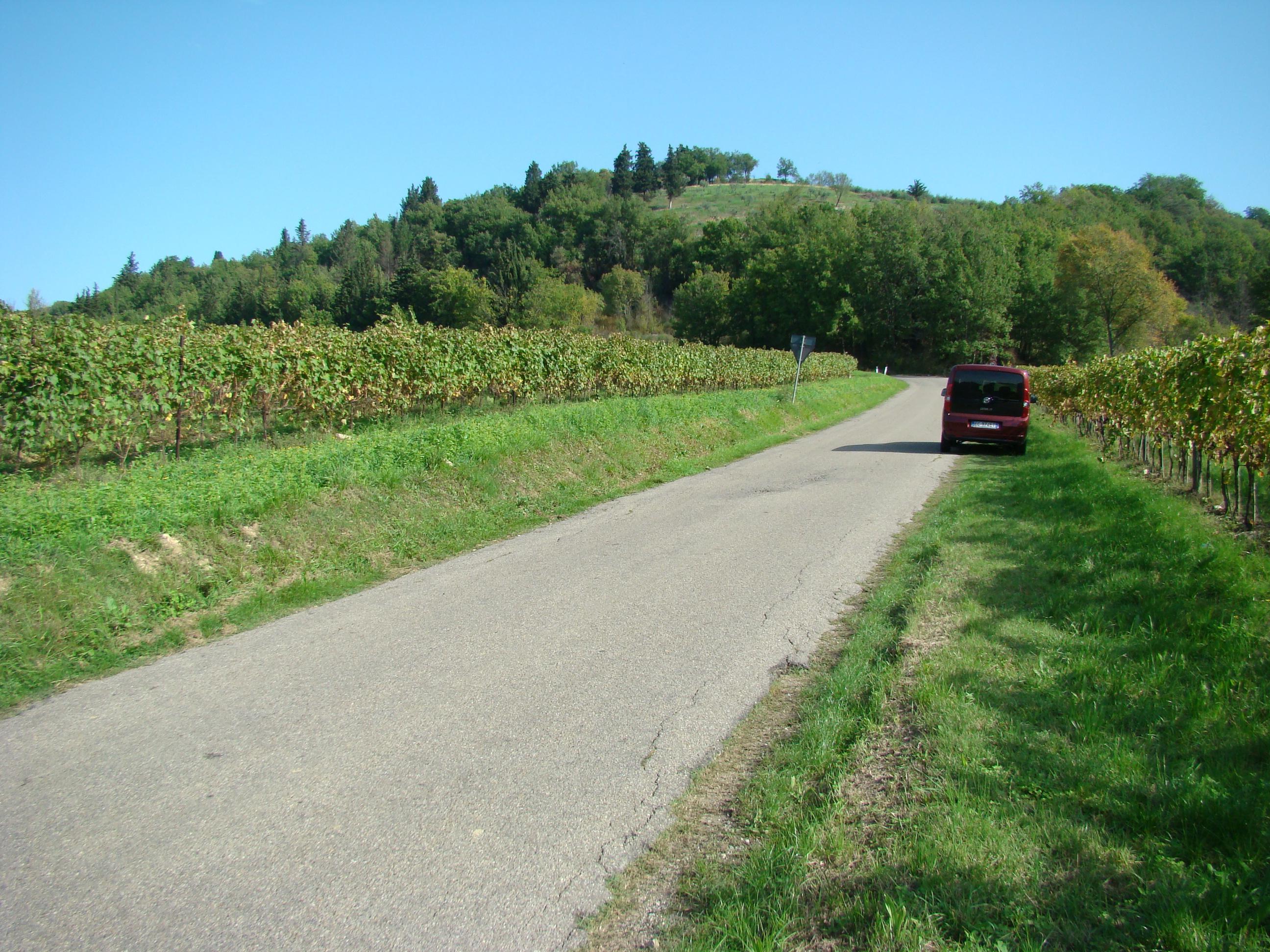 Strada per il Castello di Bibbione in località Monte di Sassi (di Giuliana Profeti)