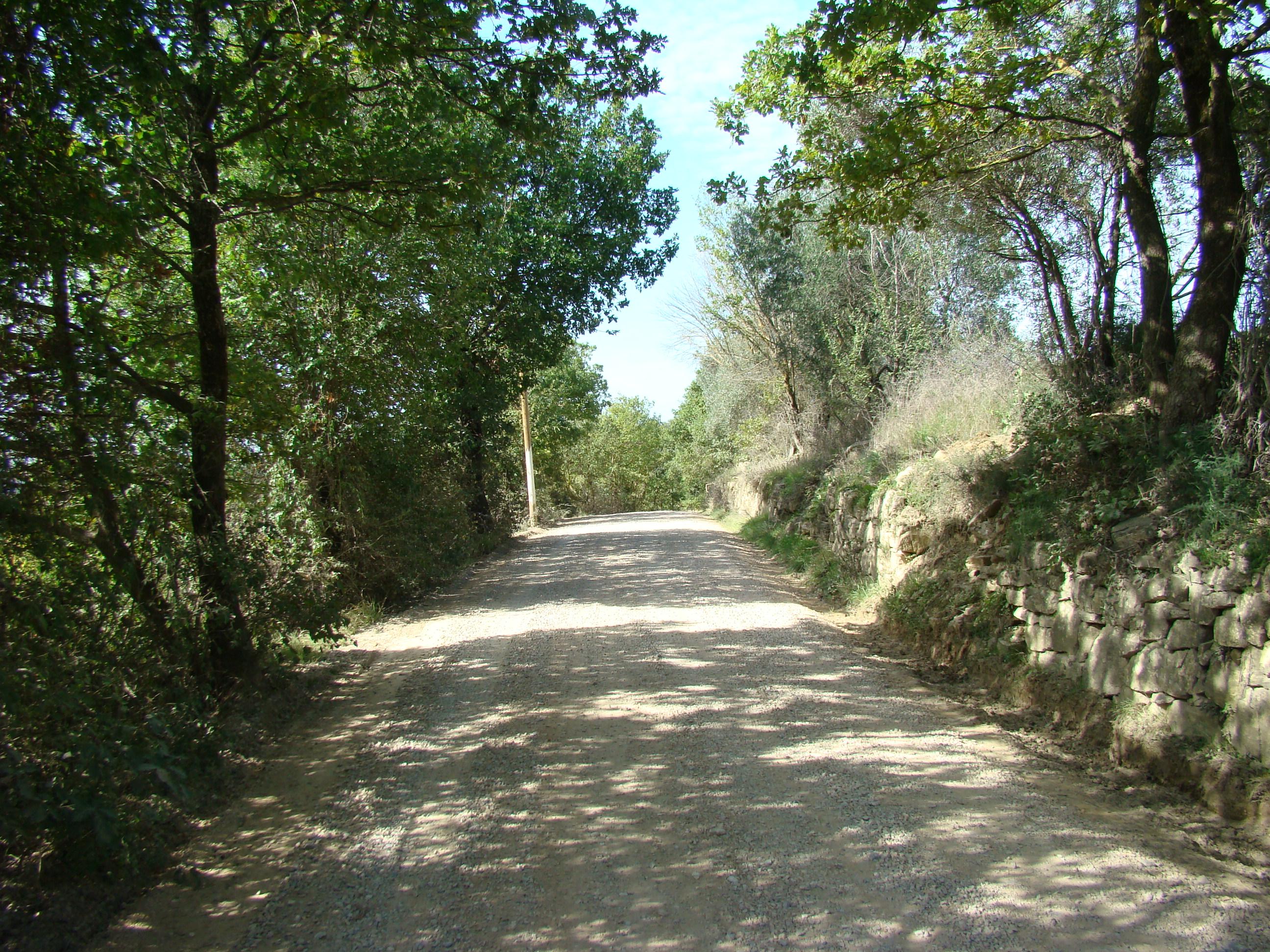 La strada vicinale per Greve (di Giuliana Profeti)