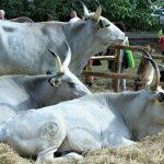 La rassegna 'Ruralia' nel Parco di Pratolino